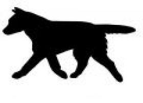 thumbnail_Aussie Cattledog W0019.jpg